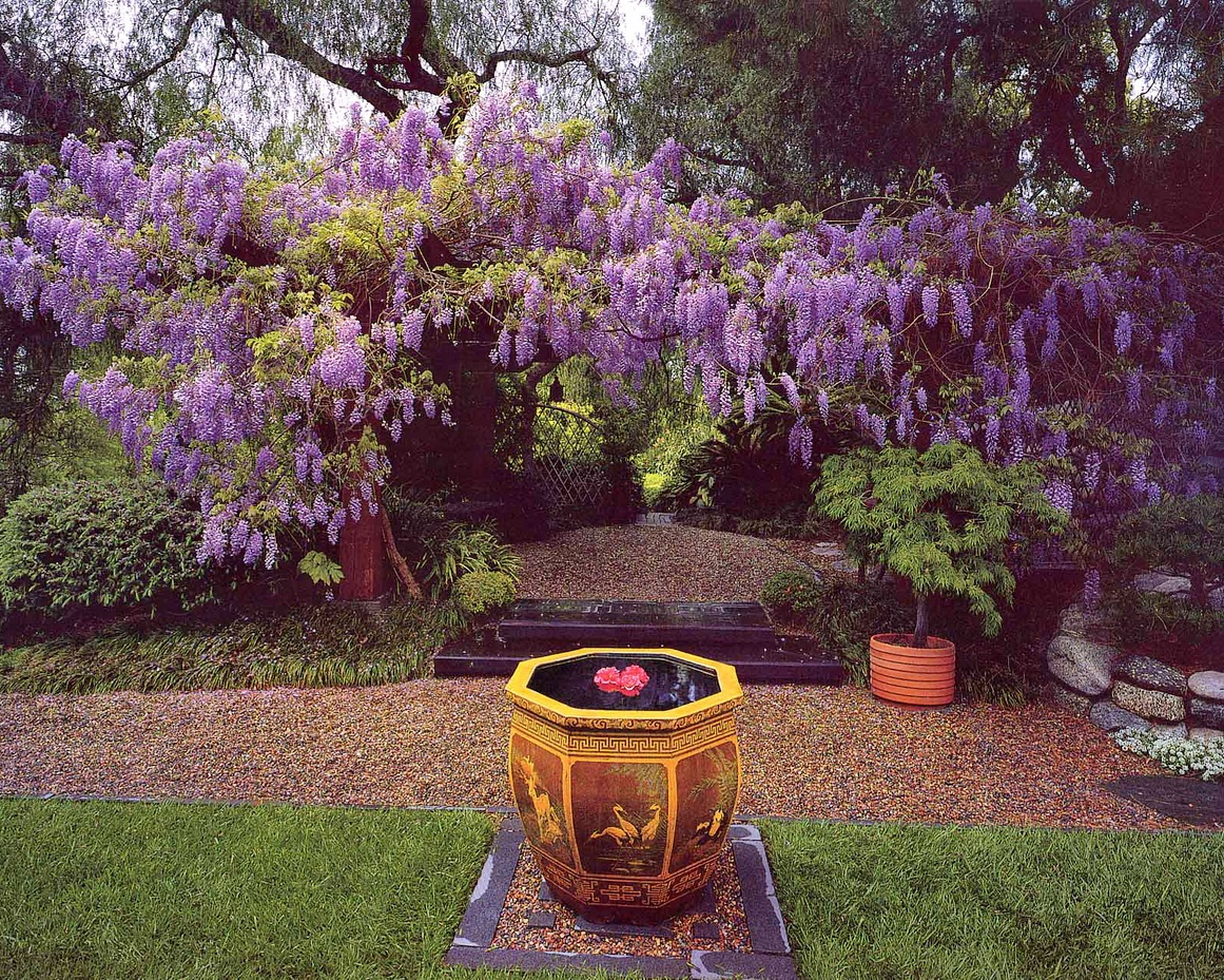 Crop_1280px-witdth_June-3-MW-Wisteria-and-Chinese-Pot.jpg#asset:14105
